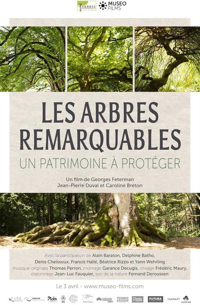 SEANCE RENCONTRE :  LES ARBRES REMARQUABLES