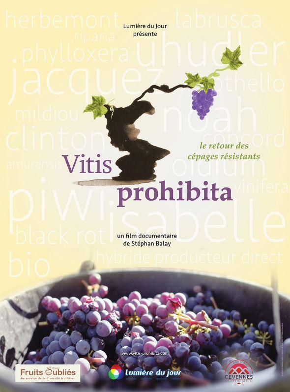SEANCE RENCONTRE : VITIS PROHIBITA